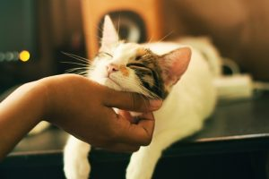 Periodontal Disease in Cats